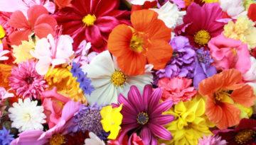 С Днём Весны и Любви!